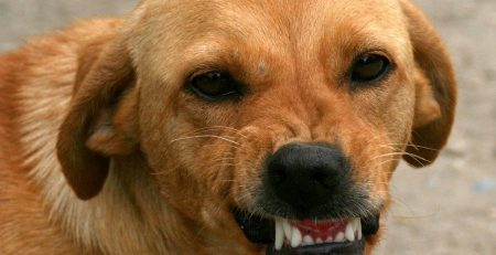 Can Dog Bites Have Long Term Effects?